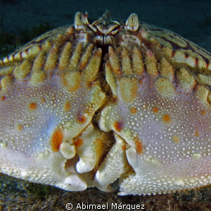 Face to face with a Flame Box Crab. by Abimael Márquez