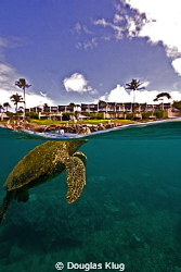Checking out the big world. A green turtle pokes its head... by Douglas Klug