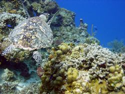 Taken on Yucab reef 2005 by Alan Manning