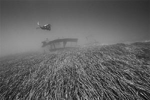 a uw flight over the seagras ;-) by Rico Besserdich