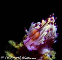 Underwater Flame by Raymond Lum