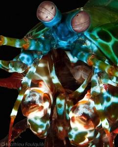 mantis gullet by Mathieu Foulquié
