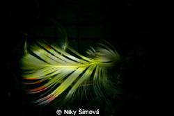 little feather by Niky Šímová