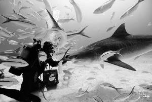 Saying hi to a friend!!!!! This Tiger Shark was a first o... by Steven Anderson