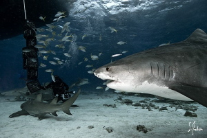 The approach of Emma as she makes her way to the bait cra... by Steven Anderson
