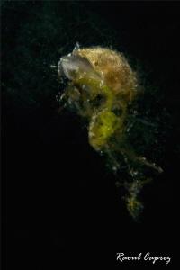 Slow ascencion (85mm +4 diopter) by Raoul Caprez
