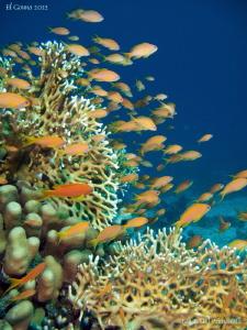 Just Red Sea. by Stéphane Primatesta