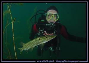 Observing a young pike fish... :O)... by Michel Lonfat