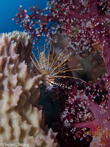 Sponge, Lionfish , Softcoral by Beate Seiler