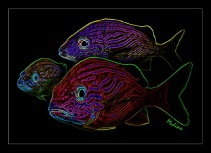 Technicolor Grunt Fish by Tomas (neon) Medina