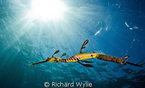 """Dragon in light"". by Richard Wylie"