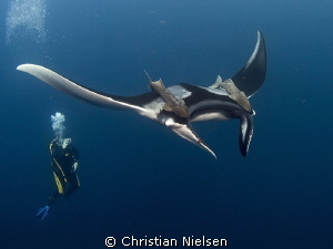Another manta shot. Hope I don't bore you. But I really l... by Christian Nielsen