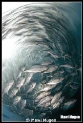 This shot is taken at USS Liberty Wreck, Tulamben, Bali. ... by Mawi Mugen