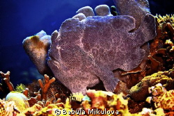 frogfish by Babula Mikulova