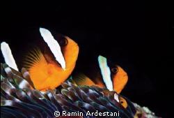 MY PERSIAN GULF-IRAN by Ramin Ardestani