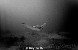 This was taken in 2007 with a first generation Sealife Re... by Giny Smith