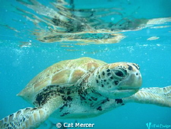 Whilst snorkling in Barbados... I got this lucky shot in ... by Cat Mercer