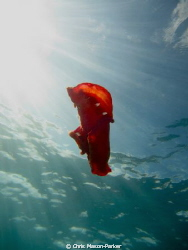 This Spanish dancer started swimming in an attempt to avo... by Chris Mason-Parker