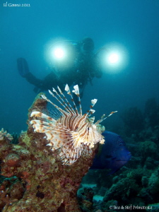 Lionfish, Angelfish and my wife Béatrice. by Stéphane Primatesta