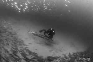 Rebreather diver infront of barracuda by Natasha Maksymenko