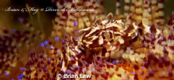 Took this beauty on the first dive at Malapascua. Hope I ... by Brian Law