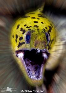 Roar!!   by Pietro Cremone