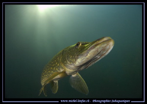 Mister King Pike Fish... :O).. by Michel Lonfat