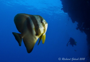 Diving the wall at Elmo's Reef-Weda Bay- Halmahera Island... by Richard Goluch