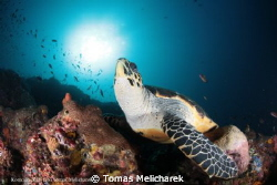 sea ​​turtle and the sun by Tomas Melicharek
