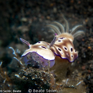 Chromodoris, taken with Canon G12 and UCL165 