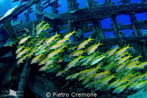 School of mullets inside a wreck by Pietro Cremone