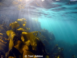 Sun rays on a cold February day.  First snorkelling trip... by Tom Ashton