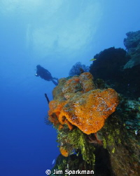 Wide angle photo of diver over the Orange Canyon Reef in ... by Jim Sparkman