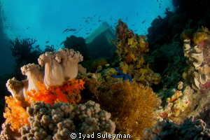 Jetty of Wakatobi Dive Resort from underwater by Iyad Suleyman