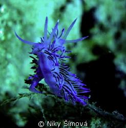 macro two flabellins by Niky Šímová
