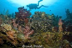 Injo, the spectacula Raja Ampat dive guide by Leah Sindel