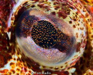Eye of a Red Irish Lord Seattle, WA, U.S.A. by Tom Radio