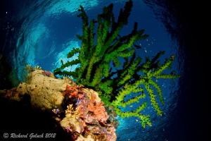 The reef thru Snell's window-Weda Bay ,Halmahera by Richard Goluch