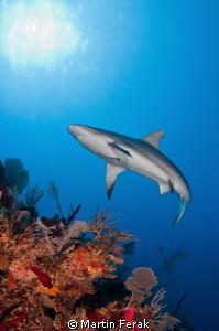 Shark n reef n sun by Martin Ferak