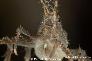 Crab Portrait canon 100mm + sub sea lens (+10) by Marcello Di Francesco