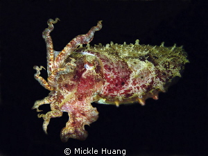 Encountered at night Cuttlefish Photoshop the backgroun... by Mickle Huang