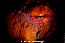 Octopussy!  600D + 60mm by Moritz Drabusenigg