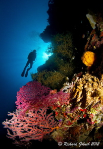 Elmo's reef-Weda Bay -Halmahera Island by Richard Goluch