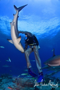 A case of tonic immobility! My buddy puts this Reef Shark... by Steven Anderson