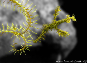 Yellow submarine......