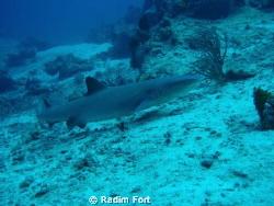 žralok lagunovy by Radim Fort