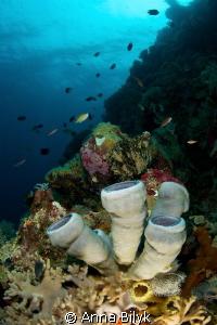 Underseascape by Anna Bilyk