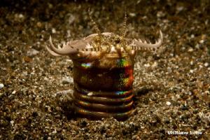 Sensors & Claws - Bobbit Worm by William Loke