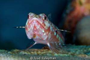 Airplane :-)