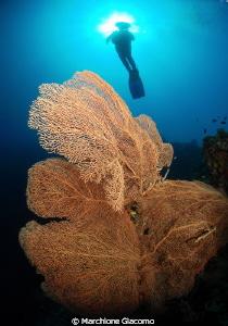 Angel Nikon D200, 10,5mm, twin strobo sea and sea Bohol... by Marchione Giacomo